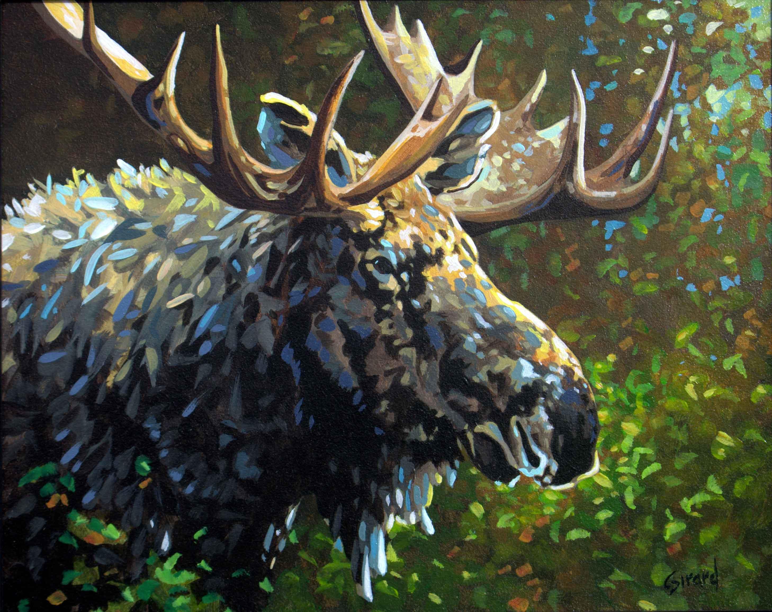 Pierre Girard - Bull Moose