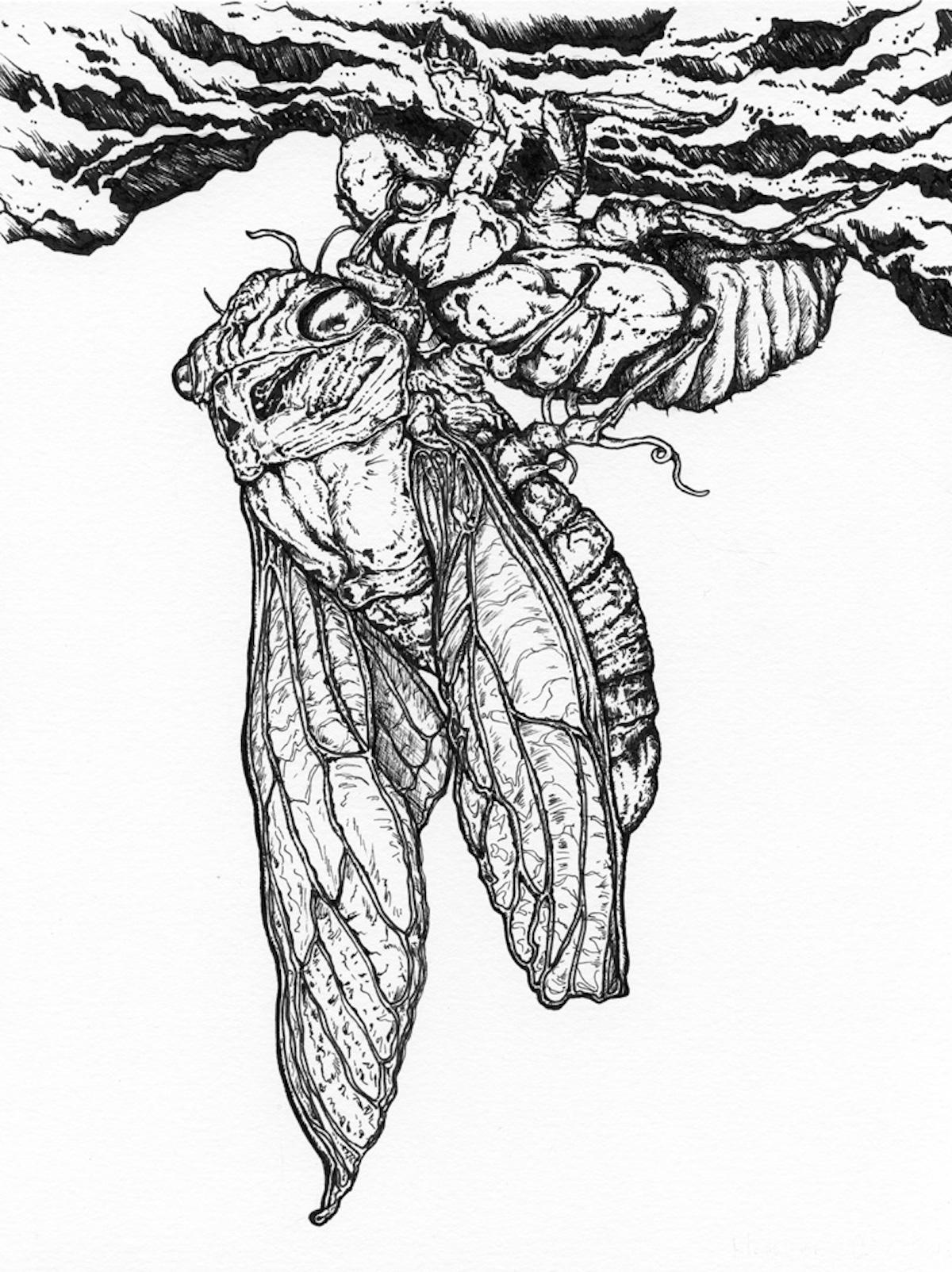 Madeleine Dubé - Métamorphose de la cigale